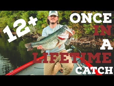 12+ Pound GIANT Northwest Arkansas Bass! Once In A Lifetime...