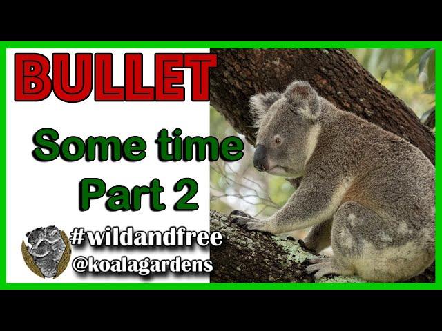 Bullet - Part 2