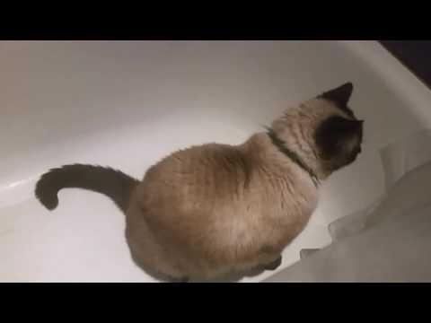 Kitty in the Bathtub