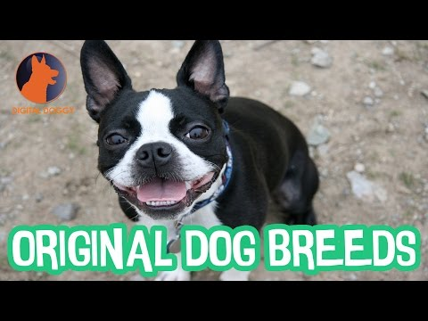 Original Dog Breeds of America