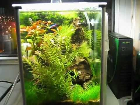 Fauna In TBMu0027s Fluval Spec Planted Aquarium