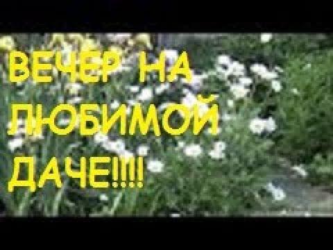 ЛЮБИМАЯ ДАЧА/ВЕЧЕР/Обзор цветов/Что на ужин