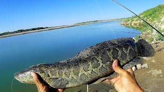 Поймал змеемонстра Рыбалка 3 5 сентября 2021 на старом мосту входной канал Сазан змееголов