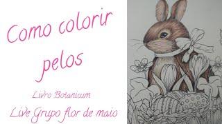 Como colorir PELOS - Live de páscoa Grupo flor de maio - Livro Botanicum - Maria trolle