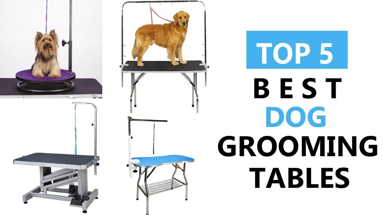 Best dog grooming tables top 5 best dog grooming tables review best dog grooming tables top 5 best dog grooming tables review solutioingenieria Gallery