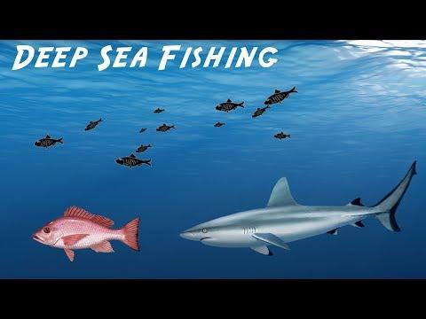 Deep Sea Fishing - Squirrel Fish And Barracuda