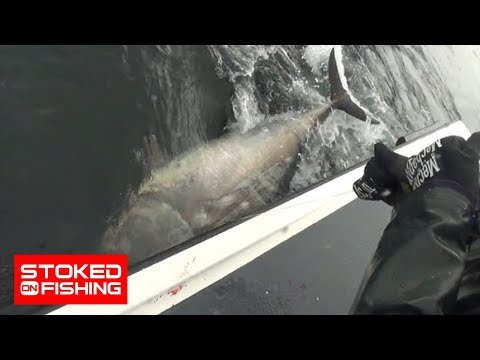 Bluefin Tuna Brawl At Prince Edward Island, part 2
