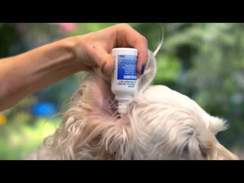 That Vet Show - How to Apply Ear Drops