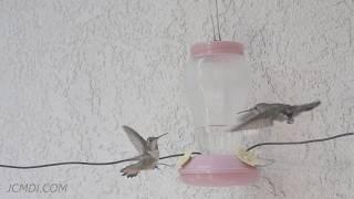 Hummingbird fights multi-clip demo reel 2 V23963
