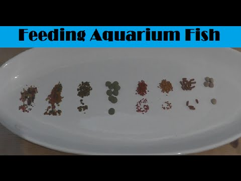 What is the best aquarium fish food youtube for How to feed fish