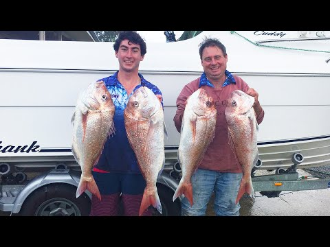 Snapper Are BANNED - Snapper Fishing SA