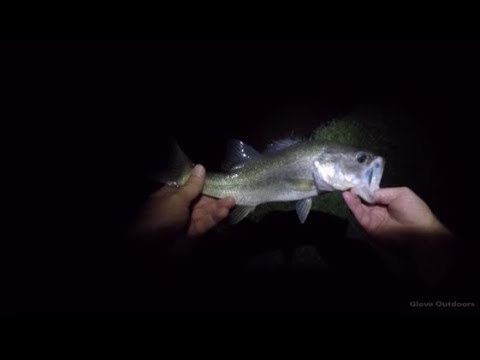 Pond Fishing At Night