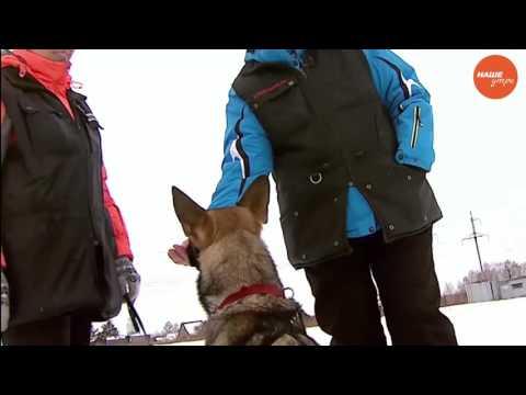 Вопрос: Почему важно приучить собаку ничего не брать из рук чужих людей?