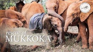 Mukkoka is rescued