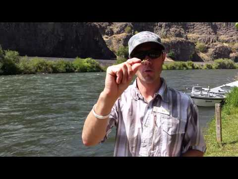 Summer Hopper Patterns And Dry Fly Tips