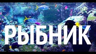 видео Морские аквариумы