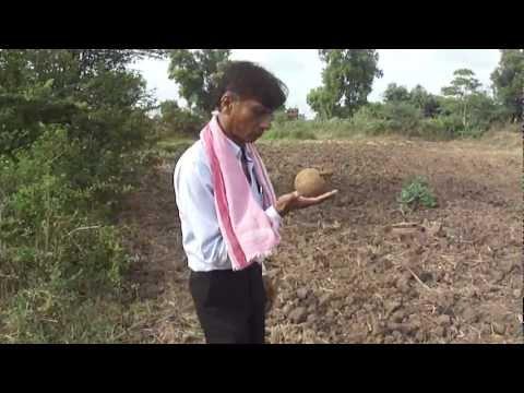 Raju Bhai Divining / Dowsing for Water using a Coconut, Kumbhar Falia, Navsari - Incredible India