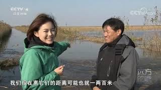 [远方的家]行走青山绿水间 冰原上的舞者——黑颈鹤| CCTV中文国际