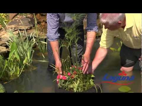 How To Plant Water Plants With P Allen Smith And Laguna Ponds
