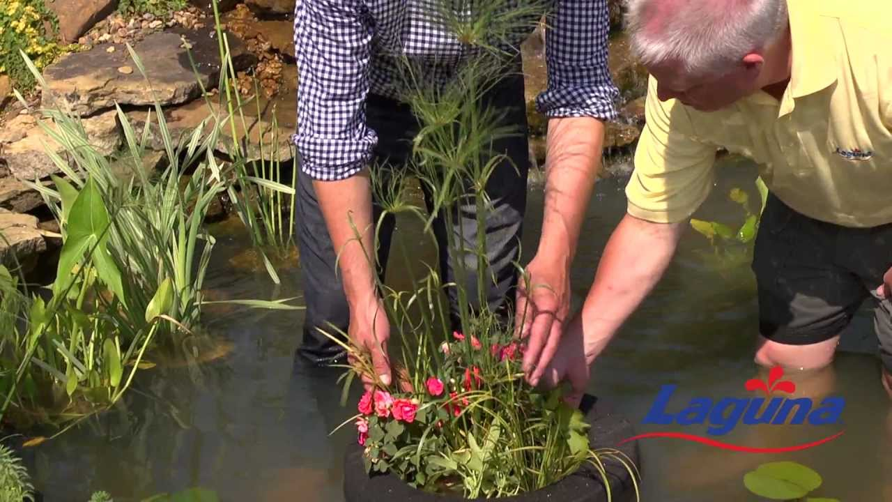 How to plant water plants with p allen smith and laguna for Plants that live in a pond