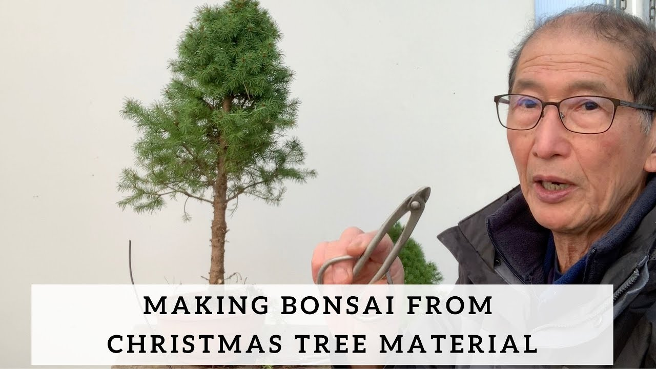Making Bonsai From Christmas Tree Material Youtube