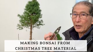 Making Bonsai from Christmas Tree Material