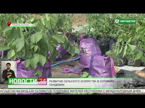 Развитие сельского хозяйства в условиях пандемии.