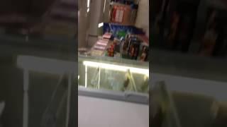 Тараканы в магазине Дикси Зеленоград 3-й район.(, 2017-02-05T14:51:14.000Z)