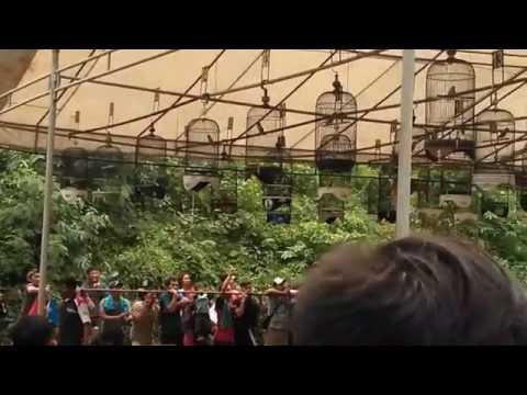 Kontes burung pancoran jakarta selatan