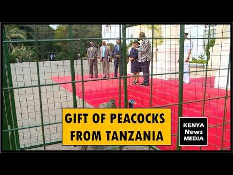 GIFT OF PEACOCKS FROM TANZANIA TO PRESIDENT UHURU KENYATTA