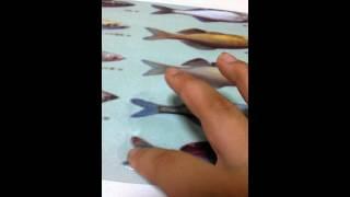 물고기 사진소개