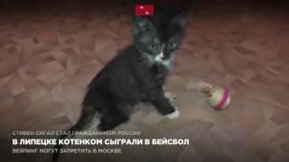 В Липецке котенком сыграли в бейсбол
