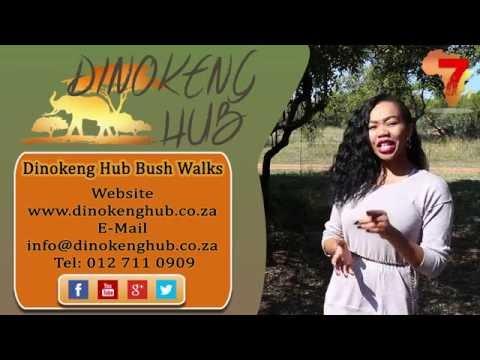 Bush Walks - Dinokeng Hub