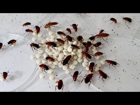大量のゴキブリに精力剤をあげた結果…衝撃の事実が発覚!