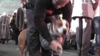 Могилёв. Выставка собак всех пород