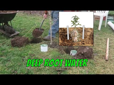 Tg Diy Deep Root Watering System Youtube