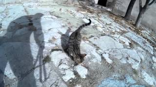 Video Playing with cat of Sultanhani Carawanserey download MP3, 3GP, MP4, WEBM, AVI, FLV September 2018