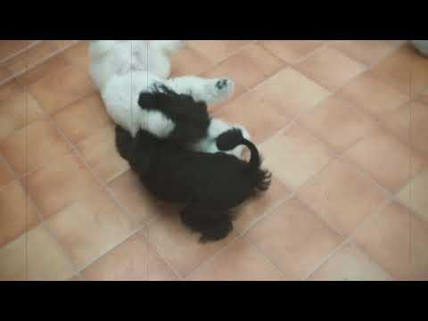 【DOG CARE HOUSE Motomachiドッグケアハウス元町】幼稚園 みんなで遊びタイム
