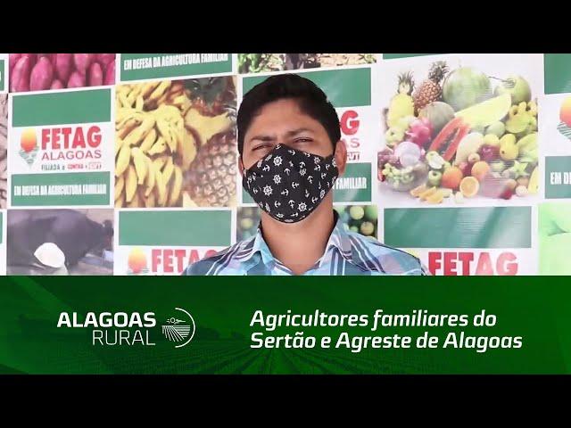 Agricultores familiares do Sertão e Agreste de Alagoas perdem a produção de feijão