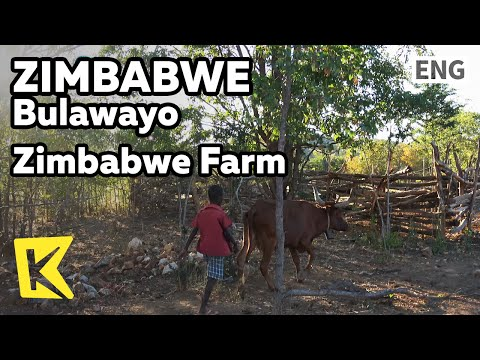 【K】Zimbabwe Travel-Bulawayo[짐바브웨 여행-불라와요]짐바브웨 농가 모습/House/Farm