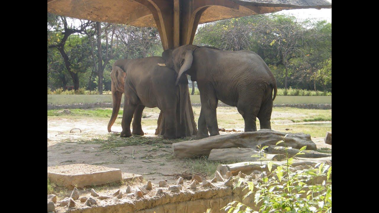 Зоопарк в Джайпуре