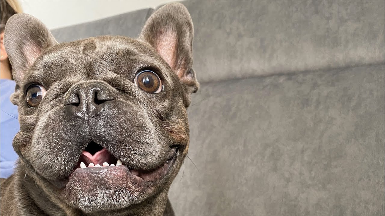 Q&A About Dogs Surgery