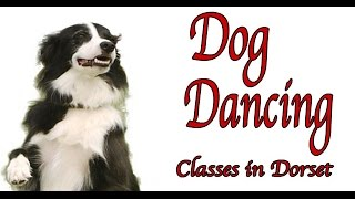 Dog Dancing Classes Dorset