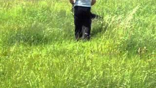 German Shepherd Malaysia- Raisa (wolfverin K9)