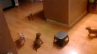 Жестокое нападение стаи собак