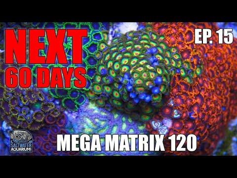 The NEXT 60 DAYS - Adding Fish, Clean Up Crew, RODI Water Top Off, Diatom Blooms - Mega Matrix 120