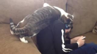 Как кот любит своего хозяина!
