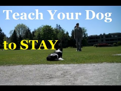 Best Way To Teach Stay - Dog Training