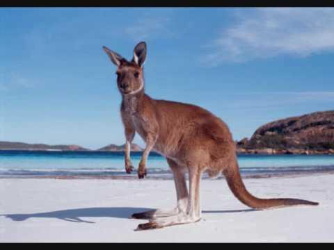 Opie & Anthony: Aussie Radio