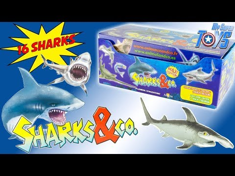 Sharks & Co Complete Box Collection 16 Sharks Blinds Bags Ti